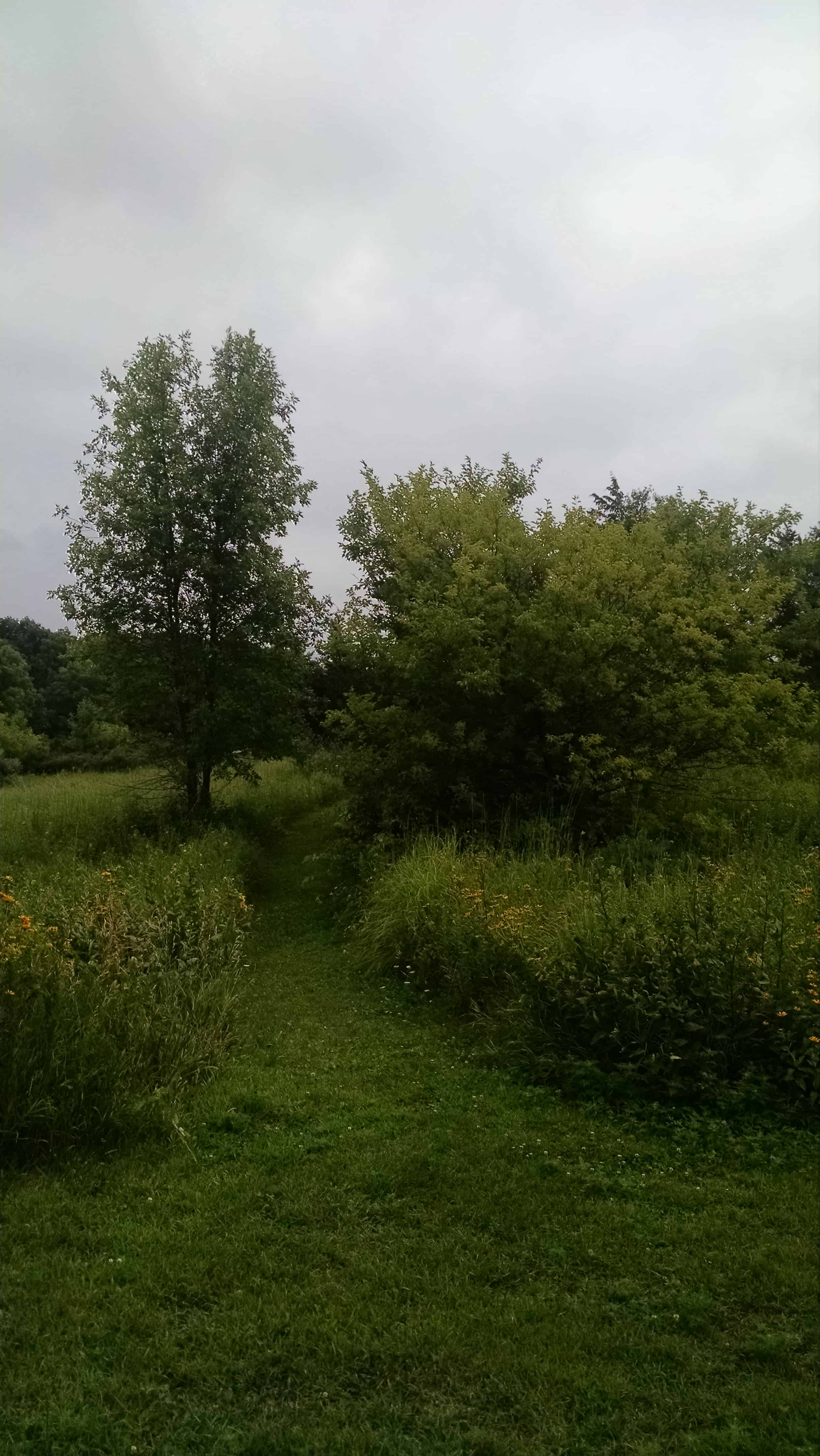 choosing fruit trees for the backyard