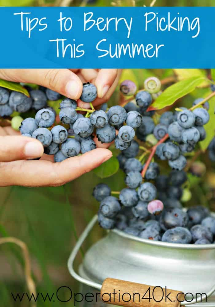 Tips to Berry Picking This Summer