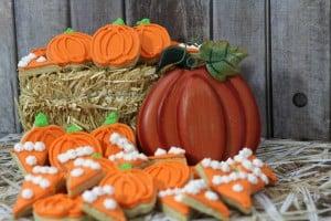 pumpkin mini 5-4