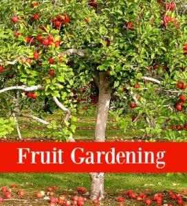 fruit gardening with Operation40k.com