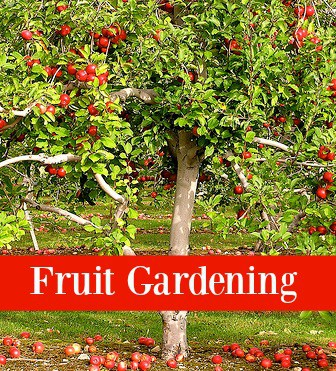 fruit gardening with Operation40k.com