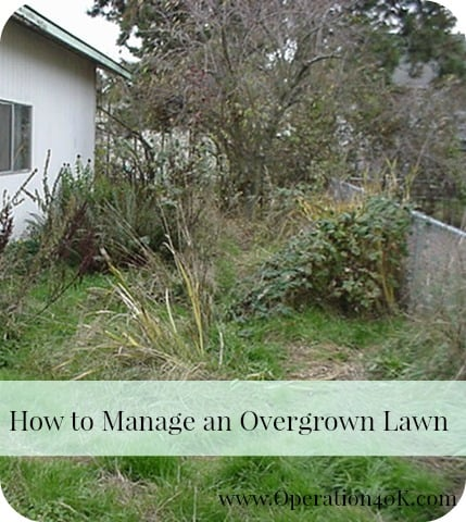 How to Manage an Overgrown Lawn