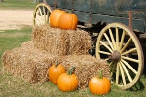pumpkins-1572854_1280