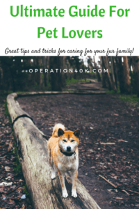 Pet Lovers everywhere will love this Ultimate Guide For Pet Lovers to take care of their furbabies! Learn how to care for them and bond with easy steps!