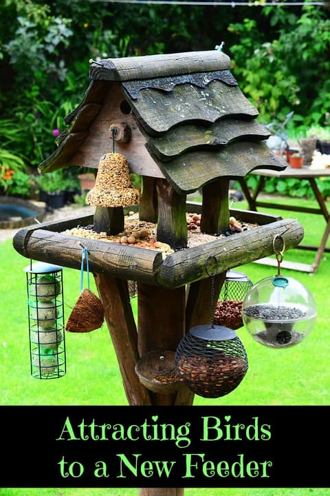 Attracting Birds to a New Feeder